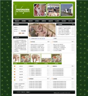网上赌博平台网站